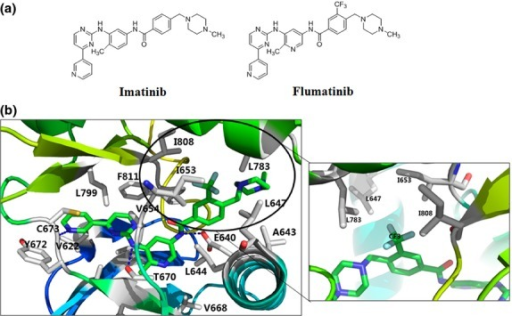 Molecular modeling of the interactions between flumatinib and KIT kinase domain. (a) Structures of imatinib and flumatinib. (b) Molecular docking model of the KIT/flumatinib complex.