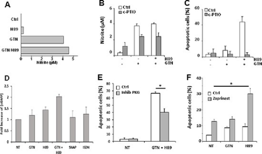 NO is involved in GTN/H89-induced apoptosis(A) Exponentially growing SW480 cells (3 × 105/mL) were treated with 10 μM GTN and/or 10 μM H89 for 48 h at 37°C. The concentration of nitrite in the medium was quantified with the Griess method. (B) Exponentially growing SW480 cells (3 × 105/mL) were treated with NO scavenger carboxy-PTIO (200 μM) for 1 h before exposure to 10 μM GTN and 10 μM H89 for 48 h at 37°C. The nitrite concentration in the medium was then measured and (C) apoptotic cells counted after Hoechst 33342 staining. Results are the means of 3 independent experiments. (D) cGMP content analysis using the colorimetric cGMP Direct immunoassay kit using lysates from SW480 cells treated with 10 μM GTN, 500 μM ISDN, 500 μM SNAP and/or 10 μM H89 for 16 h at 37°C. Data are from 1 experiment made in triplicate representative of three independent experiments (E) SW480 cells were treated with 500 μM Rp-8-Br-PET-cGMPS, a competitive inhibitor of PKG (inhib PKG), 10 μM GTN and 10 μM H89 for 48 h at 37°C, and apoptotic cells were counted. Results are the means of 3 independent experiments. *P < .05. (F) SW480 cells were treated with 200 μM zaprinast a phosphodiesterase 5 inhibitor, 10 μM GTN and 10 μM H89 for 48 h at 37°C. Results are the means of 3 independent experiments. *P < .05.