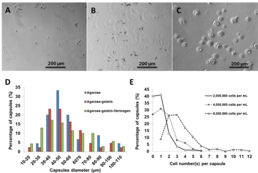 Light micrographs showing cell capsules prepared with various initial cell concentrations (A) 2,000,000, (B) 4,000,000 and (C) 8,000,000 cells·mL−1, respectively. (D) Size distribution of capsules prepared with various hydrogel formulation. (E) Cell number(s) per single capsule (as a function of various initial cell concentrations).