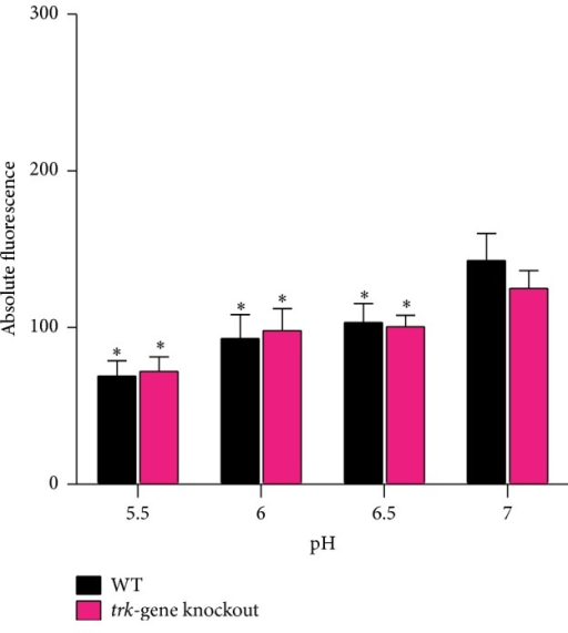 The membrane potential values of  WT and trk-gene knockout strains at varying extracellular pH levels. The results represent nine replicates from three experiments represented as absolute fluorescence ± SEM. Statistical significance was determined in relation to membrane potential observed at pH 7 for each strain and between the strains at each pH level. ∗p < 0.05.