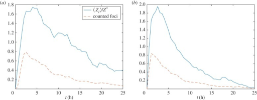 The average number of detectable γH2AX foci (, solid line) and γH2AX molecules (〈Z〉(t), dashed line) are plotted against time. (a) MDA-MB-468 and (b) and MCF7. Realizations of equation (2.1) were calculated using Gillespie's algorithm. Parameter values as in table 1. (Online version in colour.)