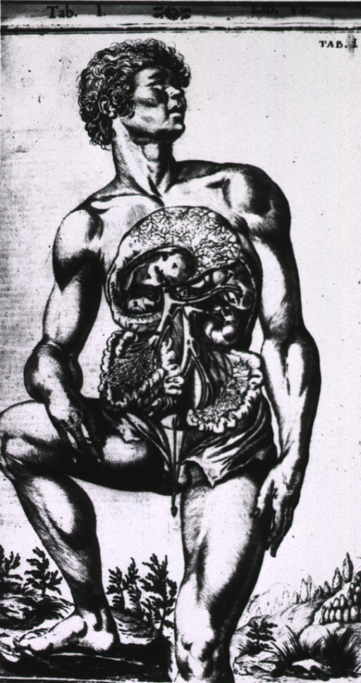 <p>Male figure standing, with abdomen open to demonstrate gastrointestinal tract.</p>