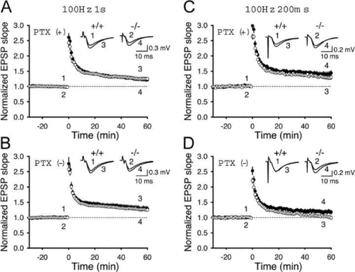 Enhanced synaptic potentiation through reduced GABAergic synaptic inhibition in μ3B−/−ΔNeo mice. (A–D) The average time course of the slope of synaptic responses in μ3B−/−ΔNeo mice and their littermate wild-type mice. Initial EPSP slopes were normalized in each experiment to the average slope value of the baseline (−30–0 min). The potentiation ratio was calculated by dividing the average slope value from 50 to 60 min by that of the baseline. Afferent fibers were tetanized at time 0 at: (A) 100 Hz for 1 s in the presence of PTX in wild-type (open circles; n = 18) and μ3B−/−ΔNeo (closed circles; n = 19) mice; (B) 100 Hz for 1 s in the absence of PTX in wild-type (open circles; n = 16) and μ3B−/−ΔNeo (closed circles; n = 13) mice; (C) 100 Hz for 200 ms in the presence of PTX in wild-type (open circles; n = 10) and μ3B−/−ΔNeo (closed circles; n = 10) mice; and (D) 100 Hz for 200 ms in the absence of PTX in wild-type (open circles; n = 14) and μ3B−/−ΔNeo (closed circles; n = 15) mice.