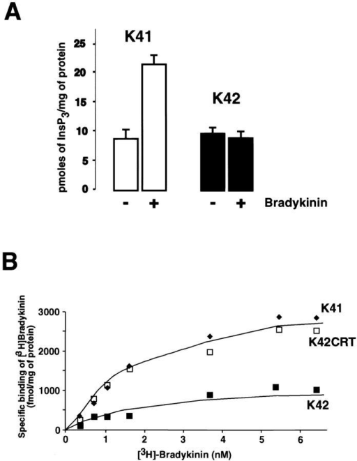 InsP3 production and [3H]bradykinin binding in calreticulin-deficient cells. (A) InsP3 synthesis was measured in wild-type (K41) and calreticulin-deficient (K42) cells incubated in the absence (−) or presence (+) of bradykinin as described in Materials and methods. Data are means ± SD (n = 3). (B) [3H]bradykinin binding to wild-type (K41), calreticulin-deficient (K42), and calreticulin-deficient cells transfected with calreticulin expression vector (K42CRT).