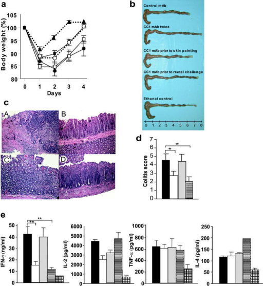 Effect of CC1 mAb injection on the induction of TNBS colitis and cytokine production. (a) Body weight of mice subjected to TNBS colitis treated either with control IgG1 mAb (□), with CC1 mAb before skin painting and before rectal challenge twice (▪), before skin painting (•), or before rectal challenge (○) in C57BL/6 mice are shown. One group was injected with 50% ethanol (▴) instead of TNBS. Data are shown as mean values ± SEM and represent eight mice per group. (b) Macroscopic pictures of colons from mice induced with TNBS colitis treated with or without CC1 mAb are shown. (c) Hematoxylin and eosin–stained pictures from TNBS colitis treated with or without CC1 mAb are shown (×100). One representative picture from each group of eight is shown. A, control mAb; B, CC1 mAb administered twice; C, CC1 mAb administered before skin painting; D, CC1 mAb administered before rectal challenge. (d) Quantitative histopathologic assessment of TNBS colitis activity shows a significant (*, P < 0.05 by t test) suppression in mice treated with CC1 mAb either twice or before rectal challenge when compared with the control mAb–treated group. Samples were collected from mice with TNBS colitis treated either with control mAb (solid bar) or CC1 mAb twice (open bar) before skin painting (shaded bar) or before rectal challenge (striped bar). Data are shown as mean values ± SEM and represent eight mice per group. (e) Th1 and Th2 cytokine production from LPLs was analyzed by ELISA. Samples were collected from mice with TNBS colitis treated either with control mAb (solid bars) or CC1 mAb twice (open bars) before skin painting (shaded bars) or before rectal challenge (striped bars). One group of mice was administered ethanol without TNBS for the skin sensitization and rectal challenge (hatched bars). CC1 mAb–treated group treated either twice or before rectal challenge exhibited significant suppression of IFN-γ production when compared with the control mAb–treated group (**, P < 0.01). Data are shown as mean values ± SEM and represent pooled values from eight independent experiments.