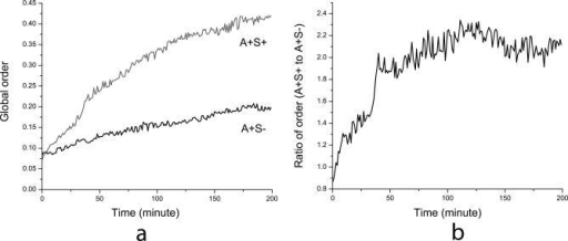 Time Evolution of the Global Order Parameter(A) Plots of the order parameter Ω for the simulation of swarming near colony edge with initial cell density of 50 K-S units.(B) Plot of the ratio of global order parameters for A+S+ and A+S− swarms.