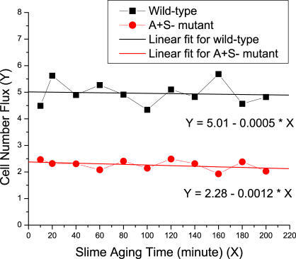 The Dependence of Cell Number Flux on the Slime Aging Time