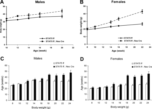 Increased body weight of Stat5fl/fl; Nestin-Cre mice.Body weight curves of males (A, Stat5fl/fl, n = 14; Stat5fl/fl; Nestin-Cre, n = 8) and females (B, Stat5fl/fl, n = 5; Stat5fl/fl; Nestin-Cre n = 6). Two Way Repeated Measured ANOVA test revealed that the effect of the genotype on body weight was significant in males (F(1,103) = 5.77, P = 0.024) and females (F9(1,36) = 64.6, P<0.001) (B). Panels C and D show body weights at various ages combined from several cohorts of mice. Values are mean±SEM, n = 5–37 per group. Two Way ANOVA analysis of variance for each age group shows a significant effect of genotype on body weight at all ages tested: 8 weeks−F(1,70) = 4.5, P = 0.037; 10 weeks−F(1,89) = 24.3, P<0.001; 12 weeks−F(1,99) = 6.4, P = 0.013; 14 weeks−F(1,80) = 8.98, P = 0.004; 16 weeks−F(1,87) = 14.9; P<0.001; 18 weeks−F(1,22) = 56.1, P<0.001; 20 weeks−F(1,13) = 37.1, P<0.001; 22 weeks−F(1,20) = 18.6, P<0.001. The effect of gender on body weight was significant at weeks 8 through 16 (with F values ranging from 24 to 87, P<0.001). The interaction between genotype and gender was detected at week 10 only (F(1,89) = 11,2, P = 0.01).