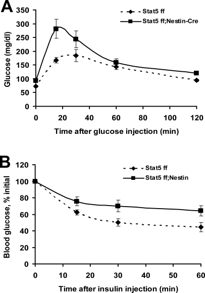 Glucose and insulin tolerance tests in 22 week-old Stat5fl/fl and Stat5fl/fl; Nestin-Cre mice.(A) Glucose tolerance tests were performed on fasted 22 week-old female mice after an i.p. injection of 2 g/kg BW glucose. Results are expressed as average blood glucose level±SEM of 5 females of each group. The effect of genotype was significant (Two Way Repeated Measured ANOVA with Holm-Sidak test: (F(1,24) = 6.6, p = 0.033. (B) Insulin tolerance test on 22 week-old females. Mice were fasted for 9 hours followed by the administration of 0.75U insulin per kg body weight. Results are expressed as average blood glucose level±SEM of 5 females of each group. The effect of genotype was significant (Two Way Repeated Measured ANOVA Holm-Sidak test: (F(1,24) = 7.3, p = 0.022). GTT and ITT were perform on the same set of Stat5fl/f and Stat5fl/fl; Nestin-Cre mice weighing mice 27.1±3.8 and 41.5±4.2 g, respectively.