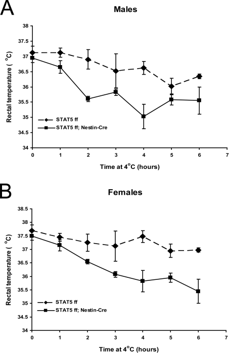 Stat5fl/fl; Nestin-Cre mice are defective in cold-induced thermogenesis.26 week-old Stat5fl/fl and Stat5fl/fl; Nestin-Cre males (A) and females (B) were housed at 4°C for 6 hours and rectal temperature was measured at 60-min intervals. The reduced cold tolerance in both males and females was statistically significant. N = 4/group. Statistical analysis was done using 'Two Way Repeated Measures ANOVA' followed by the 'Holm-Sidak test'. The effect of genotype was significant in both females (F(1, 36) = 12.4, P = 0.013) and males (18.2, P = 0.005). The effect of length of cold exposure was also significant in females (F(6,36) = 9.5, P<0.001) and males (F(6,36) = 6.9, P<0.001