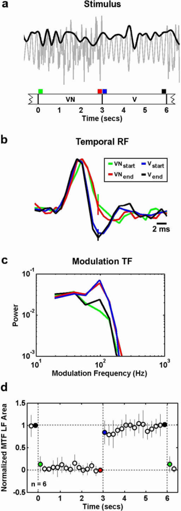 Rapid changes in temporal processing are evoked by the onset or offset of ambient noise.a) A schematic illustration of the stimulus, which switched between V and VN every 3 seconds. The gray line represents the actual stimulus and the black line represents the vocalization modulation signal. b) The temporal RFs of a typical cell estimated just before and just after noise onset and offset. The preferred frequency of the cell was 6.7 KHz. The error bars represent 95% confidence bounds. The RFs were normalized to have the same peak value for plotting. The colors of the RFs correspond to the time intervals marked in a. c) The MTFs corresponding to the RFs in b. Before computing the MTFs, RFs were normalized such that the variance of the result of the convolution of the RF with the vocalization signal was one. d) The LF area of the MTFs for a sample of 6 cells, estimated at 200 ms intervals after noise onset and offset. The colored circles correspond to the time intervals marked in a. The results for each cell were normalized such that the LF area just before noise offset was 0 and the LF area just before noise onset was 1. The error bars represent one standard deviation of the distribution of normalized LF areas across the sample of cells.