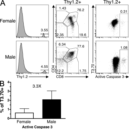 HYcd4 mixed BM chimeras as a model system to study clonal deletion in vivo. (A) HYcd4 TCRαo female BM was mixed with congenic B6.PL female and male BM and transferred into congenic female and male hosts. Chimeras were harvested at 6 wk and thymi were analyzed by flow cytometry for expression of Thy1.2, T3.70, CD4, CD8, and active Caspase 3. HYcd4 donor-derived cells were identified by Thy1.2 where indicated. Numbers represent frequency of parent gate. (B) The activation of Caspase 3 in male chimeras compared with female chimeras. The fold change in male over female is indicated. Data represent the mean from 15–17 individuals from six different experiments ± SD. P < 0.0001.