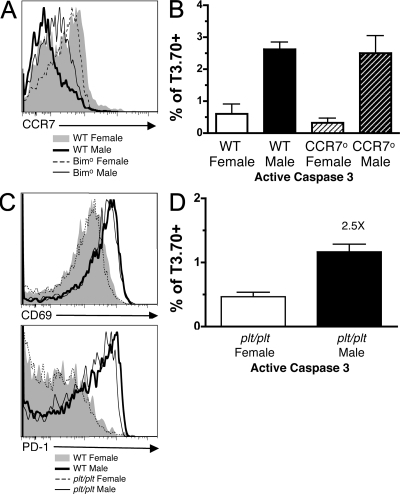 CCR7 is dispensable for clonal deletion of HYcd4 thymocytes. (A) The expression of CCR7 on female and male T3.70+ thymocytes from HYcd4 mice on a WT or Bimo background. (B) BM from female HYcd4 mice on either WT or CCR7° background was mixed with WT female or male BM and transferred into WT female or male recipients. Activation of Caspase 3 in T3.70+ thymocytes of the indicated genotype is depicted. Data represent the mean from four individuals from one experiment ± SD. P = 0.0002 when comparing either WT males and females or CCR7° males and females. The difference between WT males and CCR7° males was not significant. (C) HYcd4 Dbo BM was mixed with WT or plt/plt female or male BM and transferred into WT or plt/plt female or male mice. The expression of CD69 and PD-1 on T3.70+ thymocytes from the indicated group is shown. (D) The activation of Caspase 3 on T3.70+ thymocytes. Data depicts the mean ± SD. The fold change is indicated. P = 0.0066. Data are representative of three separate experiments.