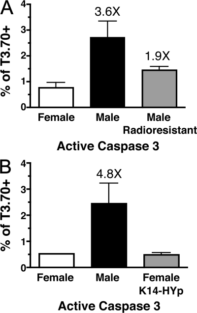 Radioresistant cells and cortical epithelial cells inefficiently induce apoptosis. HYcd4 Dbo female BM was mixed with female or male BM from WT mice and transferred into WT female and male recipients as controls. (A) A cohort of WT male mice reconstituted with a mixture of HYcd4 Dbo female BM and nontransgenic Dbo female BM was added. Data are representative of two separate experiments. (B) A cohort of female mice expressing the K14-HYp transgene reconstituted with a mixture of HYcd4 Dbo BM and WT female BM was added. Data are representative of five separate experiments. The frequency of active Caspase 3+ T3.70+ cells in chimeric mice is shown. Data represent the mean from three to six individuals ± SD. Fold change over the female control group is indicated. A, P = 0.0463 when comparing the male radioresistant group to the WT female group and P = 0.1191 when comparing the male radioresistant group to the WT male group; B, P = 0.0042 when comparing WT male and female groups and P = 0.0085 when comparing the WT male group to the female K14-HYp group.