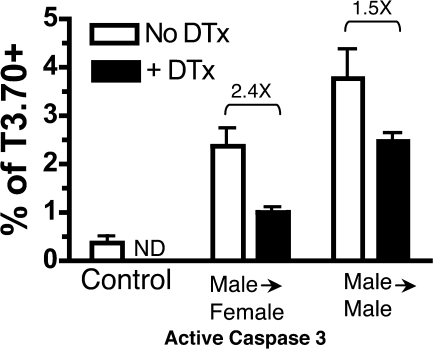 Cortical DCs are efficient APC for inducing clonal deletion. Female HYcd4 Dbo BM was mixed with nontransgenic Dbo BM or CD11c-DTR female BM and transferred into Dbo or WT female recipients, respectively, as controls. Female HYcd4 Dbo BM was also mixed with male CD11c-DTR BM and transferred into WT females or males and either left untreated or treated with DTx. Activation of Caspase 3 in treated versus untreated T3.70+ thymocytes of the indicated group is depicted. Data represent the mean from three to five mice ± SD. The fold change comparing untreated and DTx-treated mice for each group is indicated. P < 0.0001 for the male into female group and P = 0.0242 for the male into male group. ND, not done. Data are representative of four separate experiments.