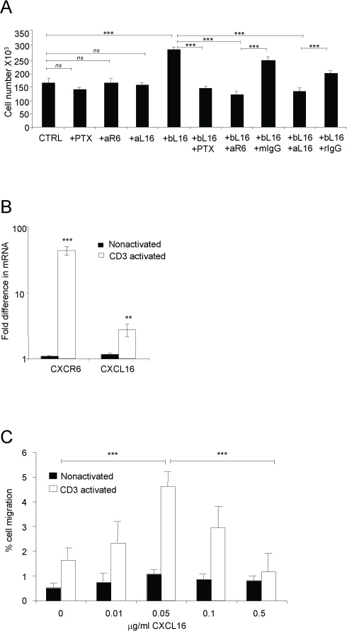 CXCL16 can mediate the proliferation and migration of CD3-activated primary CD4 T cells.(A) CD4+ T cells purified from elutriated lymphocytes from healthy donors were stimulated for 3 days with plate-bound anti-CD3 (OKT3, 10 µg/ml) with or without 5 µg/ml plate-bound CXCL16 (bL16). Treatments of anti-CD3-activated cells with PTX, anti-CXCR6 (aR6) and anti-CXCL16 (aL16) without bL16 were done as controls. Mouse IgG (mIgG) and rat IgG (rIgG) were used as controls for anti-CXCR6 antibody and anti-CXCL16 antibody, respectively. Bars show means±SEM from one representative experiment out of five, using five donors. Anti-CXCL16 was used in a total of four, and anti-CXCR6 in two experiments. ns, not significant and ***, p<0.001. (B) CXCR6 and CXCL16 mRNAs were measured by real-time RT-PCR in CD3-activated and non-activated CD4+ T cells after 3 days. Values were normalized by setting the non-activated sample with lowest expression equal to 1. Bars show means±SEM combined from duplicate wells from seven different donors. **, p<0.01 and ***, p<0.001 vs. non-activated cells. (C) Anti-CD3-activated or nonactivated CD4+ T cells were analyzed for migration to CXCL16, expressed as percentages of input cells migrating. Each bar represents the mean±SEM obtained from triplicate wells from a total of three experiments performed. ***, p<0.001 on cross bars are indicated for comparisons between activated cells - 0 vs. 50 ng/ml CXCL16 and 50 ng/ml vs. 500 ng/ml CXCL16.