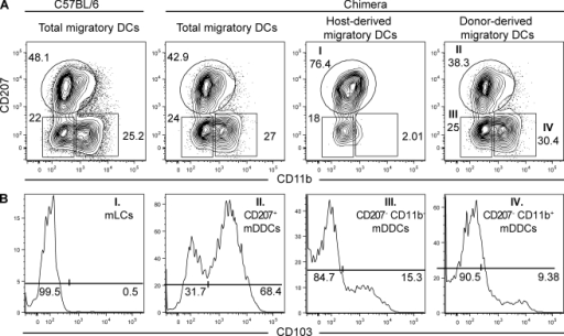 Draining CLNs contain five skin-derived DC subsets. Flow cytometry analysis of the skin-derived migratory DCs (MHCIIhigh CD11cinter-to-high) present in CLNs from C57BL/6 (B6) mice and B6 (CD45.1)→B6 (CD45.2) BM chimeras. MHCIIhigh CD11cinter-to-high DCs were analyzed for the expression of CD207 versus CD11b and CD103 expression determined on each of the specified DC subsets. (A) A single CD207+ CD11b−/low DC cluster is present in the CLNs of B6 mice. Unlike DDCs, LCs are radio resistant, and this permits the use of B6 (CD45.1)→B6 (CD45.2) chimeras to split the single CD207+ CD11b−/low DC cluster into host-derived mLCs and into CD103+ and CD103− donor-derived mDDCs. Two additional mDDC subsets with a CD207+ CD11b− and CD207− CD11b+ phenotype can be identified in both C57BL/6 mice and B6 (CD45.1)→B6 (CD45.2) chimeras. (B) Expression of CD103 among the DC subsets found in the dermis of B6 (CD45.1)→B6 (CD45.2) BM chimeras. The percentages of cells found in each of the specified gates are indicated. Data shown are representative of at least 12 chimeric mice corresponding to six independent experiments.
