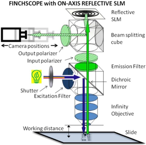 Microscope configuration for holographic imaging. A fluorescent slide was positioned on the stage of the microscope and illuminated by standard epifluorescence methods. The illumination was controlled with a shutter to minimize photobleaching. The fluorescence emission passed through an input polarizer aligned with some angle to the polarization sensitive axis of the SLM. The emission beam reflected off of the SLM containing the appropriate diffractive lens patterns and then through an output polarizer before reaching the CCD camera.