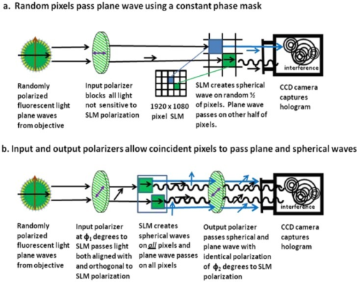 Comparison of using a constant phase mask (a) versus the polarization method (b) to select and separate the plane and spherical waves in FINCH holography. Notice that when the polarization method is used, all the pixels on the SLM are used to create the diffractive lens pattern.