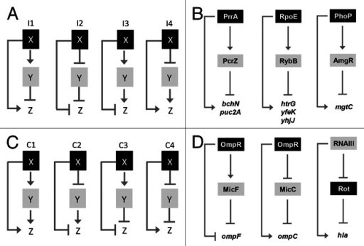 Figure 2. (A and C) Structure and regulatory output of incoherent and coherent FFL motifs. Four different types (I1-I4 and C1-C4) are depicted, where X and Y refer to transcription factors (black boxes) and small RNAs (gray boxes), respectively. Z reflects target genes of X and Y, modified from Mangan and Alon.9 In the case of the RNAIII FFL, Rot stands on one hand for the rot mRNA, repressed by RNAIII, on the other hand for the Rot protein, repressing hla. (B) Schematic picture of the PrrA/PcrZ, RpoE/RybB and PhoP/AmgR mixed incoherent FFLs in R. sphaeroides, E. coli and S. enterica, respectively. (D) Schematic picture of mixed coherent FFLs. The OmpR-based and RNAIII-based FFLs from E. coli and S. aureus, respectively, are depicted.