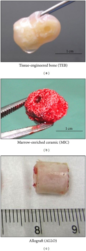 Gross appearance of implants used in the three treatment groups.