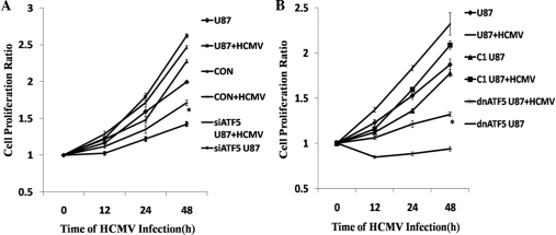 Cell viability analysis of siATF5 or dnATF5 U87 cells following HCMV infection. (A) U87 cells expressing non-targeting siRNA or ATF5 short hairpin RNA were infected with HCMV for 0, 12, 24 or 48 h. Knocking down ATF5 expression reduced tumor cell proliferation. HCMV-infected siATF5 U87 marginally promoted proliferation. (B) U87 cells were produced with loss of ATF5 function using a dn form. The results were consistent with siATF5 U87 cells. Cell proliferation was measured using 3-(4,5-dimethylthiazol-2-yl)-2,5-diphenyltetrazolium bromide assay. Data are presented as the mean ± standard deviation of three independent experiments (*P<0.05 vs. con + HCMV). si, small interfering; dn, dominant-negative; ATF5, activating transcription factor 5; HCMV, human cytomegalovirus; con, control.
