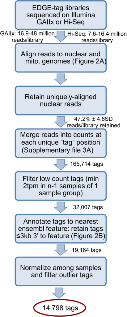 Schematic illustrates library sequencing, read processing, tagannotation, and filtering after the creation of the EDGE-tag transcriptomelibraries (see 'Materials and methods').Sequential actions are listed in each box, while the number of resultingreads/EDGE-tags are labeled between boxes. tpm = 'Tags permillion'.DOI:http://dx.doi.org/10.7554/eLife.04517.005