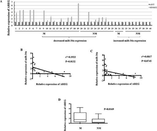 (A) The relative expression of AREG mRNA in NHSCC tumors and the adjacent normal epithelial tissues(B) The relative expression of AREG mRNA in metastatic samples was significantly higher than that in non-metastatic samples. (C) General correlation between miR-34a and AREG mRNA relative expression in 40 samples. (D) The inverse correlation between miR-34a and AREG mRNA relative expression in 29 samples.