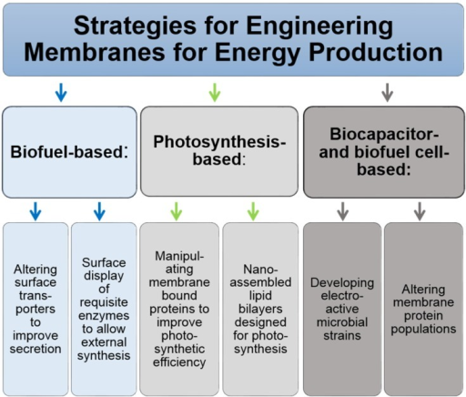 Overview of strategies for biofuel synthesis where membrane engineering has a central role.