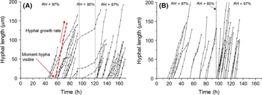 Hyphal length as a function of time for hyphae growing on gypsum samples while exposed to a single period of lowered RH with Δt = 24 h, RHmin = 90% (a) and Δt = 1 h, RHmin = 60% (B). Per figure, the data were obtained from tracing hyphae in two movies of growth on samples exposed to the low RH period. The dotted lines indicate the period of exposure to RHmin. The growth rate and moment of appearance of each individual hypha are determined with a linear fit, as illustrated with the dashed line in (A). t = 0 corresponds to the moment of inoculation.