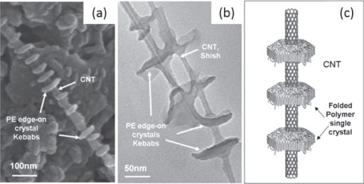 (a) SEM image of MWCNTs decorated by disc-shaped PE single crystals. (b) TEM image of enlarged PE/MWCNT shish kebab structure. (c) Schematic representation of the PE/CNT shish kebab structure. The PE forms folded lamellar single crystals on the CNT surface with polymer chains perpendicular to the lamellae. Reproduced with permission from C Y Li et alAdv. Mater.17 1198. Copyright 2005 John Wiley and Sons.