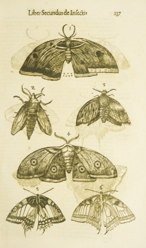 <p>Display of six moths and butterflies, each with outstretched wings.</p>
