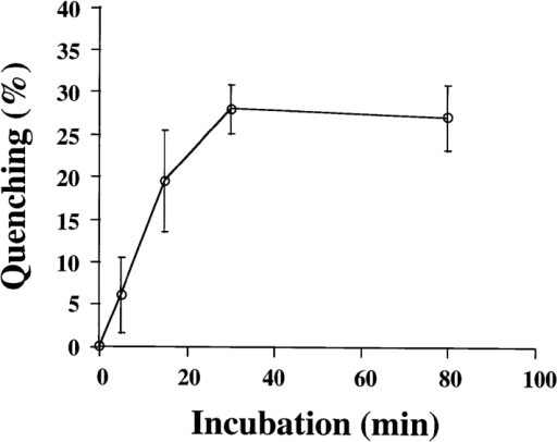 A fraction of internalized B-fragment is recycled to the plasma membrane.  FITC-labeled B-fragment  was internalized into HeLa  cells at 19.5°C, the cells were  then incubated with anti-FITC antibody on ice for 30  min and shifted to 37°C in the  continued presence of the  anti-FITC antibody for the indicated periods. Fluorescence at each time point was determined  as described in Materials and Methods and compared with the 0  time point to determine quenching due to newly recycled B-fragment. The means (± SE) for three independent experiments are  shown.