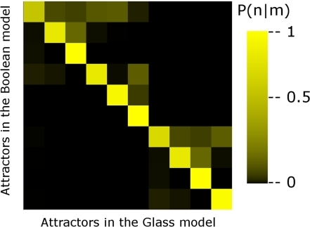 Changes in the basins of attraction of the continuous model with respect to the Boolean model.Color map of the probability P(n/m) that a microscopic configuration whose associated Boolean configuration belongs to the basin of attraction of attractor m, ends up in attractor n using Glass dynamics. Note that the main transitions occur along the diagonal where attractors are reached by both dynamics (Boolean and Glass); however, the non-diagonal elements indicate that two microscopic configurations that correspond to the same Boolean configuration may end up in different attractors.