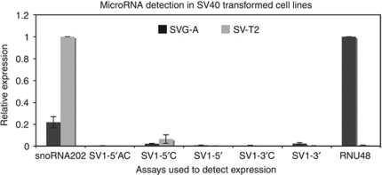 Relative background detection in SV40-transformed cell lines. Assays against the various miRNAs were tested for fidelity using the mouse SV40-transformed cell line, SV-T2, and the human SV40-transformed cell line, SVG-A. Cell lysates enriched for small RNAs were reverse transcribed using each specific assay. Quantitative PCR was performed to measure the levels of each SV40 miRNA in relation to the mouse control small RNA, snoRNA202, and the human control small RNA, RNU48. Error bars represent the s.e. of two experiments for SV-T2 cells or three experiments for SVG-A cells. The relative quantification of miRNA was performed according to the 2−ΔΔCt method, comparing product amplified from mouse cells relative to snoRNA202, and product amplified from human cells relative to RNU48.