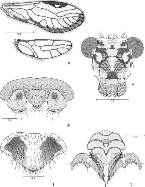 Loneura tuluaensis sp. n. female 8 Forewing and Hindwing 9 Front view of head 10 Paraprocts and epiproct 11 Subgenital plate 12 Gonapophyses and ninth sternum. Scales in mm.