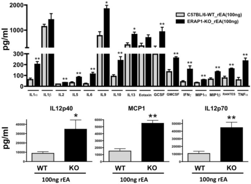 ERAP1-KO mice exhibit dramatically enhanced capabilities to respond to rEA and release pro-inflammatory cytokines.C57BL/6 WT and ERAP1-KO mice were either mock (PBS) injected or intraperitoneally injected with 100 ng/mouse of rEA protein. n = 4 for all groups of mice. Plasma samples were collected at 6 hpi and were analyzed using a multiplexed bead array based quantitative system. Bars represent mean ± SEM. Statistical analysis was completed using two-tailed homoscedastic Student's t-tests; *, ** - indicate values, statistically different between WT_rEA and ERAP1-KO_rEA groups, p<0.05, p<0.001, respectively.