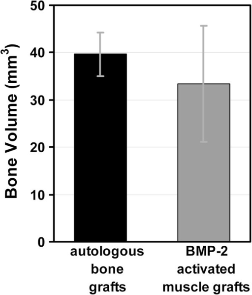 Bone volume determined by micro-CT. Micro-CT evaluation of the bone volume of defects treated with autologous bone grafts and BMP-2 activated muscle grafts. Values given represent means ± SD; (autologous bone grafts, n = 6; BMP-2 activated muscle grafts, n = 6). No statistically significant difference in bone volume of femora receiving autologous bone grafts versus BMP-2 activated muscle grafts could be determined (p = 0.12).