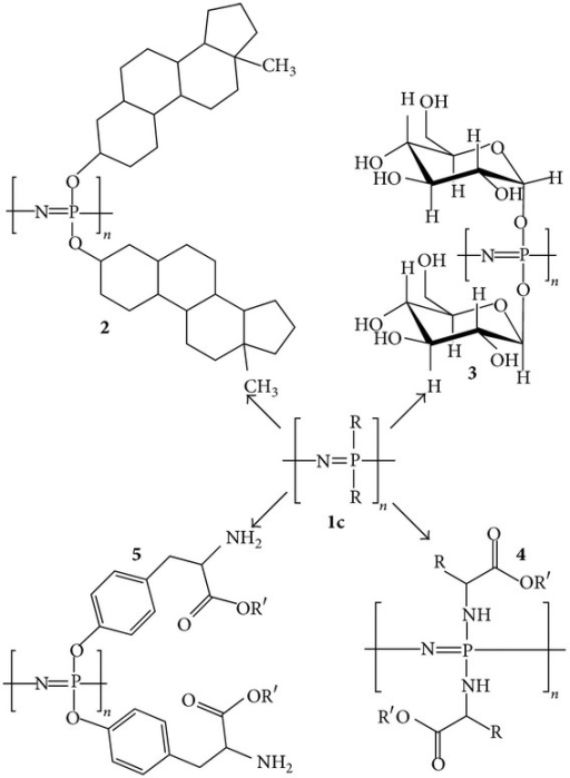 Structures of various polyphosphazenes including steroidal substituents (2), carbohydrates (3), amino acid esters (4), and side chain-bound amino acid esters (5), to name a few. Adapted from [5] by permission of the Royal Society of Chemistry (http://dx.doi.org/10.1039/B926402G).