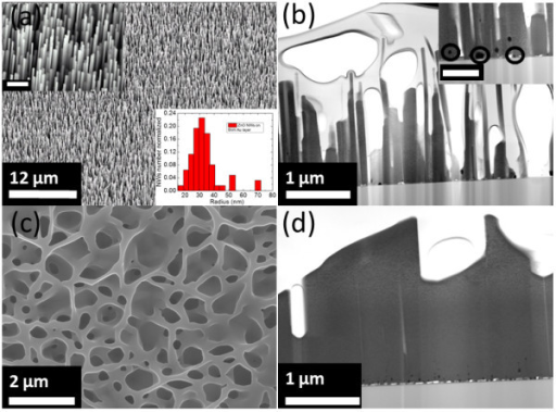 Typical SEM and STEM ZnO nanoarchitectures images. (a) 22° side-view SEM image of ZnO NWs. Inset shows the high magnification of the sample. Scale bar is 1 μm. (b) Corresponding STEM image of the sample. Inset shows the high magnification of the sample showing the presence of Au nanoparticles at the ZnO/SiC interface. Scale bar is 500 nm. (c) Top-view SEM image of ZnO NWLs. (d) Corresponding STEM image of the sample.