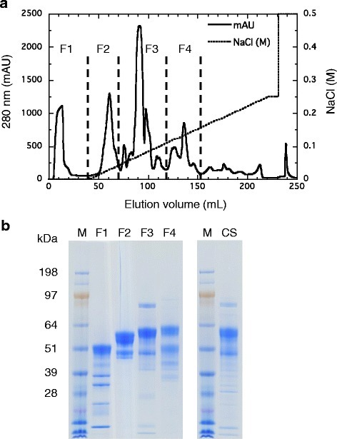Elution profile (a) and SDS-PAGE analysis (b) ofT. cellulolyticusculture supernatant from a Resource Q column. Protein peak fractions were eluted with a linear gradient of 0 to 0.25 M NaCl in 20 mM MES buffer (pH 6.5) and pooled into four groups (F1, F2, F3, and F4). Ten micrograms of protein were loaded per lane on SDS-PAGE analysis. CS, culture supernatant; M, protein marker; MES, 2-(N-morpholino) ethanesulfonic acid.