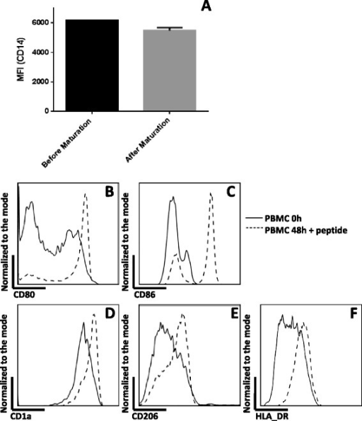 FACS analysis showing the phenotype of PIDCs used in the vaccine preparation. A) After a two day incubation in the presence of GM-CSF, and pulsating with HPV E7 peptide for two hours, CD14 positive cells persistently expressed CD14 at a slightly lower level. B) CD14 positive cells expressed a higher level of CD80 following incubation with GM-CSF and HPV E7 peptide. C) CD14 positive cells expressed a higher level of CD86 following incubation with GM-CSF and HPV E7 peptide. D) CD14 positive cells expressed a higher level of CD1a following incubation with GM-CSF and HPV E7 peptide. E) CD14 positive cells expressed a higher level of the Mannose receptor (CD206) following incubation with GM-CSF and HPV E7 peptide. F) HLA-DR was up-regulated in CD14 positive cells following incubation with GM-CSF and HPV E7 peptide.