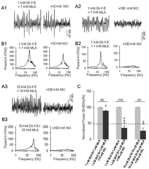 The effects of pretreatment of nAChR antagonists on the roles of higher concentrations of nicotine on γ oscillations.(A1): Representative extracellular recordings of field potentials induced by KA (200 nM) in the presence of DhβE (1 μM) + MLA (1 μM) and DhβE + MLA + NIC (10 μM). (B1): The power spectra of field potentials corresponding to the conditions shown in A1. (A2): Representative extracellular recordings of field potentials induced by KA (200 nM) in the presence of DhβE (1 μM) + MLA (1 μM) and DhβE + MLA + NIC (100 μM). (B2): The power spectra of field potentials corresponding to the conditions shown in A2. (A3): Representative extracellular recordings of field potentials induced by KA (200 nM) in the presence of DhβE (10 μM), MLA (10 μM) and DhβE + MLA + NIC (100 μM). (B3): The power spectra of field potentials corresponding to the conditions shown in A3. (C): Bar graph summarizes the percent changes in γ power before and after application of nicotine at10 μM and 100 μM in the pretreatment of DhβE + MLA (1–10 μM for both). Gray bars: The percent changes in γ power in the pretreatment of DhβE + MLA. Black bars: The percent changes in γ power after application of nicotine in the pretreatment of DhβE + MLA (*p < 0.05, **p < 0.01, ***p < 0.001, compared with control, one way RM ANOVA).