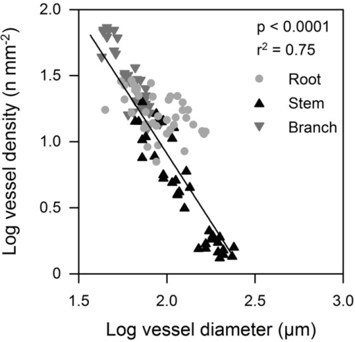 Mean vessel diameter in relation to vessel density in tree organs (roots, stems, and branches) along the flow path for the six tree species.