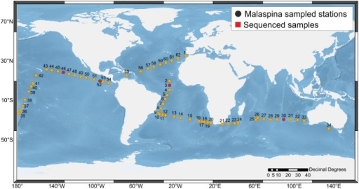 Oceanic stations from Malaspina 2010 circumnavigation selected for RNA analysis.Stations labeled in red correspond to those from which amplicon sequences were obtained.