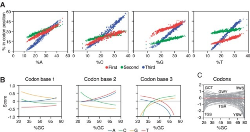 Associations of nucleotide-type usages with codon position. (A) Base usages at the three codon positions of genes in relation to the overall usage of the same base. Each point represents the average usage in the corresponding codon position from the collection of all coding sequences annotated in one genome. (B) Log-odds-ratio scores associated to each base at the three codon base positions as a function of GC content. (C) Corresponding log-odds-ratio scores for the 61 codons with the highest- and lowest-scoring codon types indicated for low, intermediate and high GC content (W = AT, S = CG, R = AG, Y = CT)