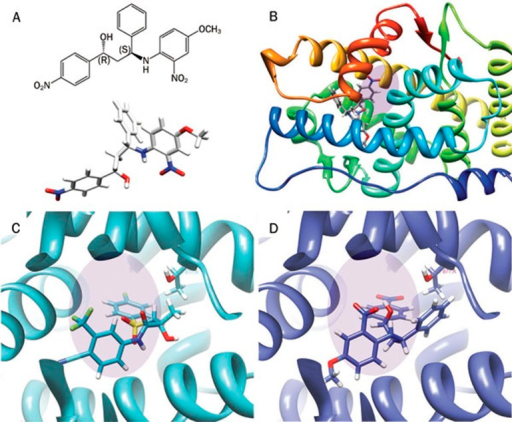 Molecular modeling of isomer 6012-4 to androgen receptor. (A) The structure of isomer 6012-4. (B) Isomer 6012-4 is docked in the androgen receptor binding domain (2AXA). (C) Binding position of selective androgen receptor modulator S1 in the androgen receptor ligand-binding domain (AR-LBD) (2AXA). (D) Predicted binding position of isomer 6012-4 in AR-LBD. The shaded ellipse indicates the location of the androgen receptor active function 2 (AF2) domain.