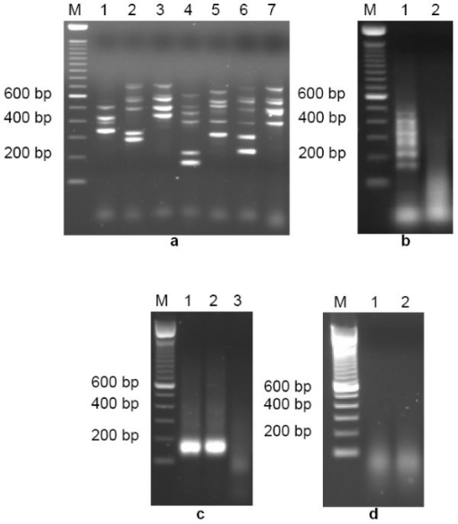 Multiplexing PCR and subsequent amplicon fragmentation results, prior to APEX reaction on HapMap Chip. (a) Standard multiplex PCR from a single Coriell DNA sample using optimally-designed primers [Additional files 1 &2] within seven unique multiplex groups (lanes 1–7; lane M shows 100 bp DNA ladder markers), showing wide range of amplicon sizes across the 50 SNP loci. (b) Purification, concentration and fragmentation of standard PCR amplicons. Lane 1 represents an aliquot of concentrated mixture of all seven multiplex products shown in Fig. 1a. Lane 2 shows the fragmentation result, generating single-stranded nucleic acid of 30–100 base length. (c) Multiplex PCR amplification of all 50 SNP loci in a single reaction tube using new PCR primer set [Additional file 6], showing 50-plex PCR products (individual SNP loci amplicons are unresolvable by agarose gel electrophoresis) from two Coriell DNA samples (lanes 1 & 2), plus a negative PCR control (lane 3). (d) Fragmentation of 50-plex PCR amplicons from aliquots of lane 1 & lane 2 samples shown in Fig. 1c.