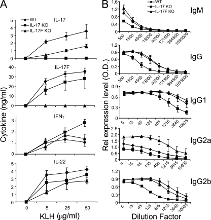 Analysis of T and B cell responses in IL-17 and IL-17F KO animals. IL-17F KO, IL-17 KO, and WT control mice were immunized with KLH in CFA (three per group). 7 d later, the mice were killed and spleens and blood were collect. (A) Splenocytes from the immunized mice were restimulated with KLH for 3 d, and cytokine expression was measured by ELISA. (B) KLH-specific antibodies were measured in the sera by ELISA. The sera were subject to a threefold serial dilution, and the antibody concentrations are shown as the mean for each group. Results are mean ± SD.