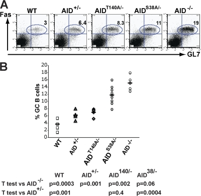 Percentage of GC B cells from AIDS38A and AIDT140A mice. (A) Representative FACS analysis that shows percentage of FAS+GL7+ GC B cells in AID−/−, AID+/−, AIDT140A/−, AIDS38A/−, and wild-type (WT) mice 10 d after immunization. (B) Percentage of GC B cells in the lymph nodes of AID−/−, AID+/−, AIDT140A/−, AIDS38A/−, and WT mice 10 d after immunization from 6–8 mice. Each point represents an immunization experiment from a single mouse.
